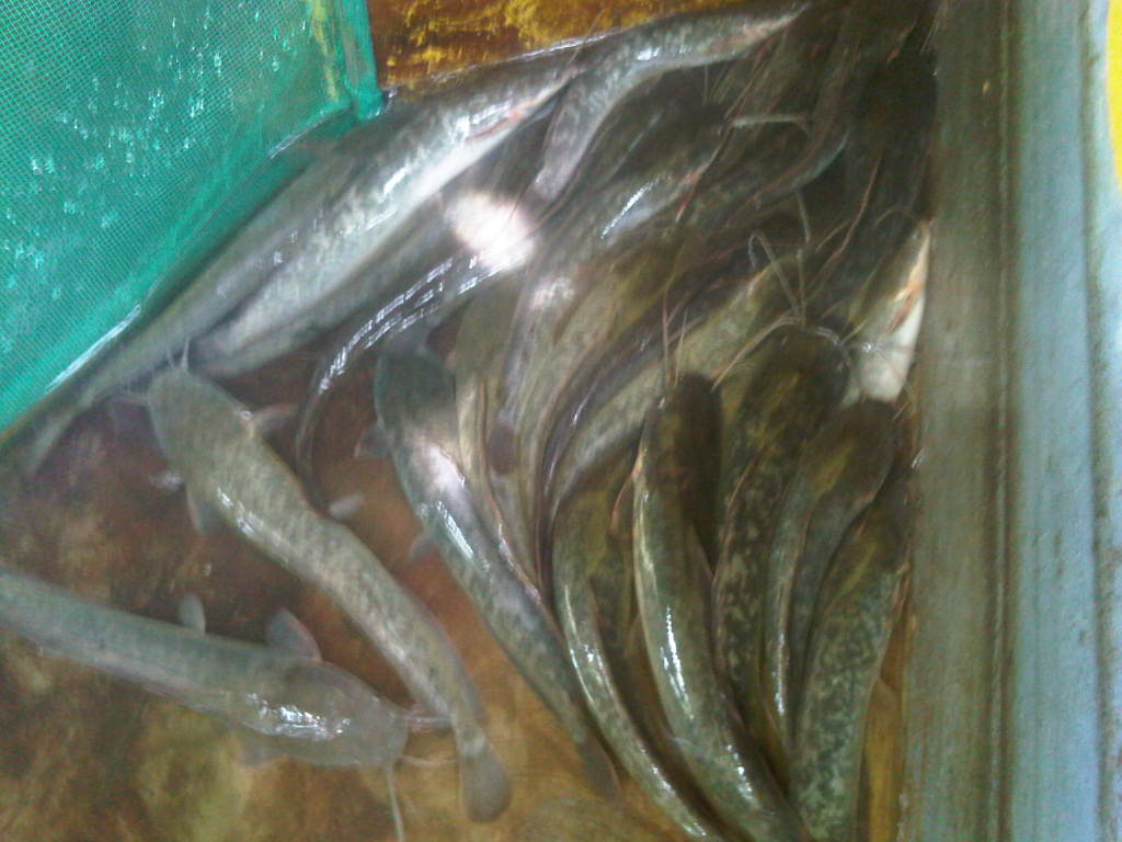 Tambun-20121230-02198