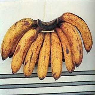 pisang-barangan